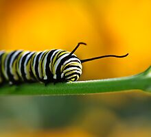 Caterpillar - stripes by SuzOH