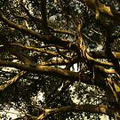 Protection Tree by -aimslo-