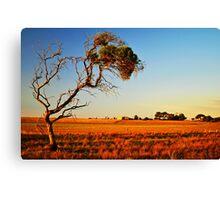 SA Countryside Canvas Print