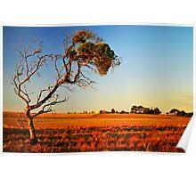 SA Countryside Poster