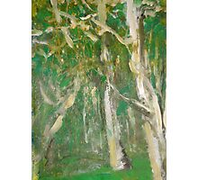 Dancing Trees Photographic Print