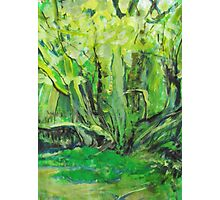 Flowing Green Photographic Print