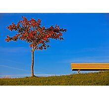 Tree and Yellow bench Photographic Print