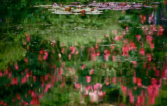 Homage to Monet by Denise McDonald