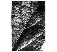Leaf Structure Poster