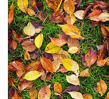 Atumn Leaves on Green Grass by Tim McGuire