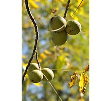 Nuts to You Photographic Print