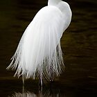 Great White Egret  by Ian Creek