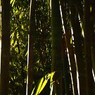 Bamboo Phone by Rene Fuller