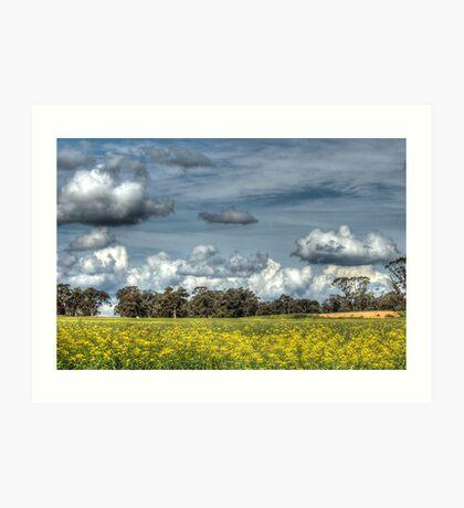 Canola & Clouds Art Print