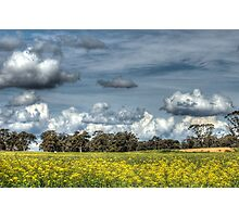 Canola & Clouds Photographic Print