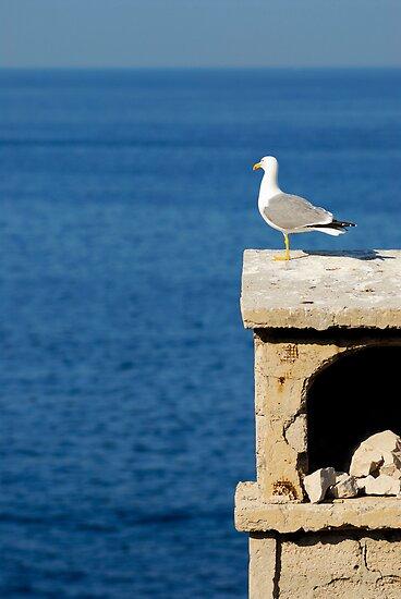 Seagull overlooking Mediterranean sea by Sami Sarkis