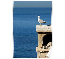 Seagull overlooking Mediterranean sea Poster