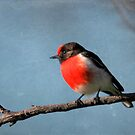 Red-capped Robin by Kerryn Ryan, Mosaic Avenues