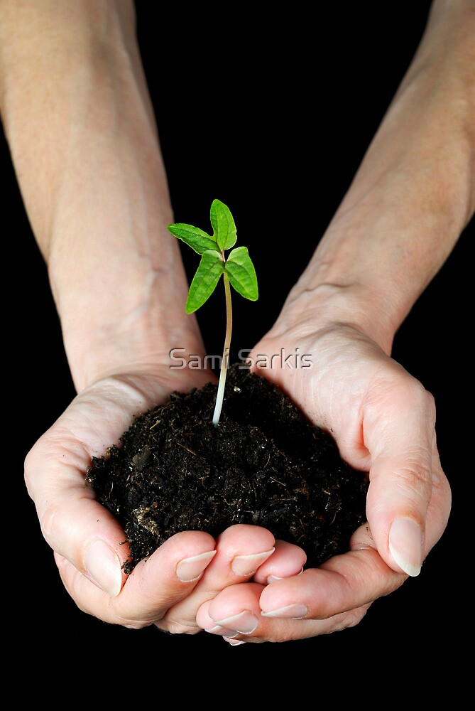 Woman's hands holding seedling by Sami Sarkis