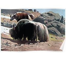 Friedrich Wilhelm Kuhnert A groups of yaks grazing in a mountainous landscape Colour Wellcome Poster