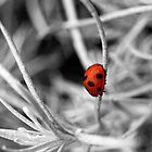 Lady in red by Gregoria  Gregoriou Crowe