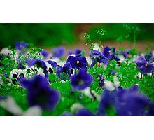 Flowers_3 Photographic Print
