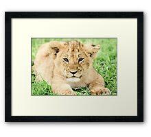 Kittenish Cub Framed Print