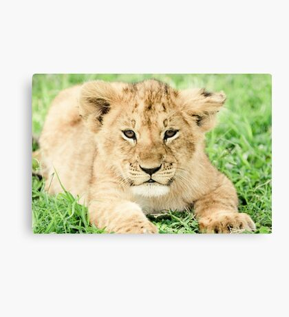 Kittenish Cub Canvas Print