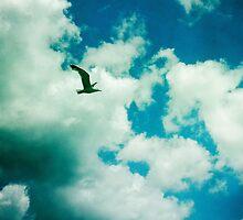 Seagull by Cara Gallardo Weil