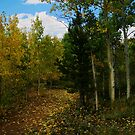 Aspen Lined Path by Lisa G. Putman