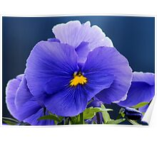 Blue Viola/Pansy Smiley Face Poster