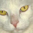 Snow cats eyes by Paul  Donaldson