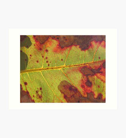 Kakadu leaf Art Print