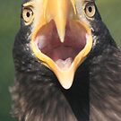 Steller's Sea Eagle shout  by DutchLumix