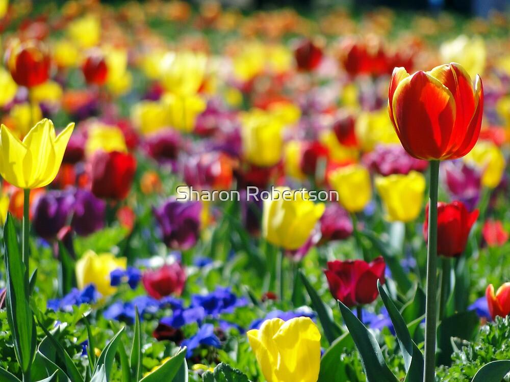 Floriade 2011 - April by Sharon Robertson