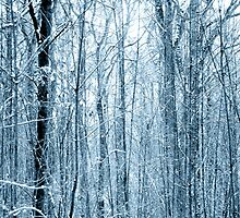 Forest in Winter by SSDema