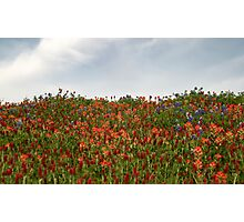 Hilltop Wildflowers Photographic Print