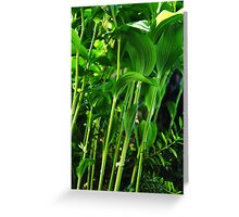 Grass Roots Greeting Card