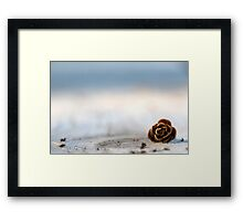 Squirrel Leftovers Framed Print