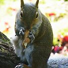 I will not share my nut  by Ann Persse