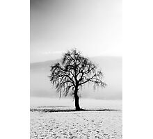 Lone tree in the snow Photographic Print