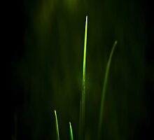 Blades of Grass by SSDema