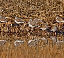 Waders and reflections by PaulScoullar