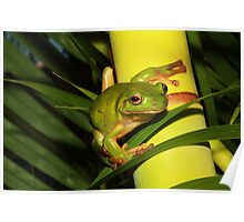 Gree Tree Frog. Poster
