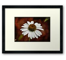 Single Cone Flower - Textures Framed Print