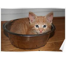 Kitten in a Bowl Poster