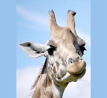 Giraffe for iphone by AmandaJanePhoto