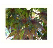 Green Maple Art Print
