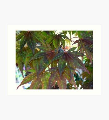 Green Maple Art Print