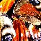 Butterfly Wings 1 by Shelly Still