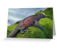 Marine Iguana on rock covered with green seaweed Greeting Card