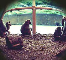 Monkey See, Monkey Do by lroof