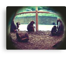 Monkey See, Monkey Do Canvas Print