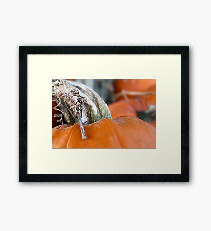 Pumpkin Love 2 Framed Print